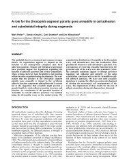 A role for the Drosophila segment polarity gene armadillo in cell ...
