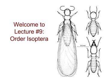 welcome to lecture 9 order isoptera