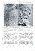 Centrichnus, new ichnogenus for centrally pattemed attachment scars - Page 6
