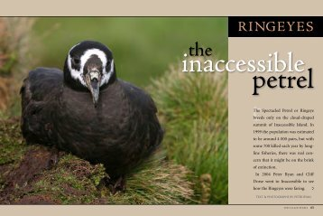 Ringeyes: the inaccessible petrel.
