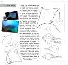 Monografia Raia - Page 6