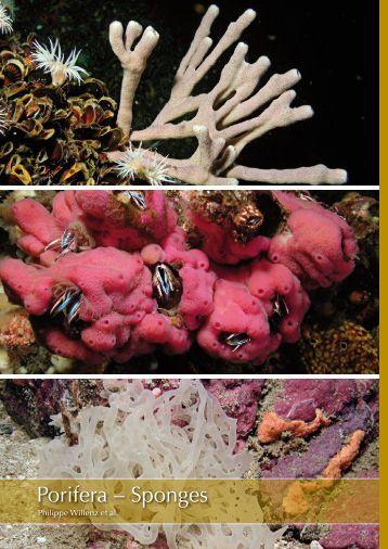 Porifera – Sponges - Marine Benthic Fauna of Chilean Patagonia