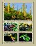 "Stephens Island: Land of ""Lizards"" - International Reptile ... - Page 2"