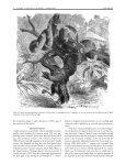 "Stephens Island: Land of ""Lizards"" - International Reptile ... - Page 6"