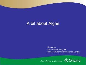 A Bit About Algae Presentation