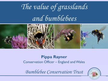 The value of grasslands and bumblebees - Grasslands Trust