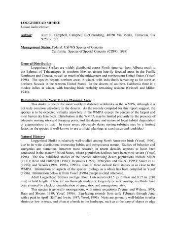Loggerhead for Bureau land management