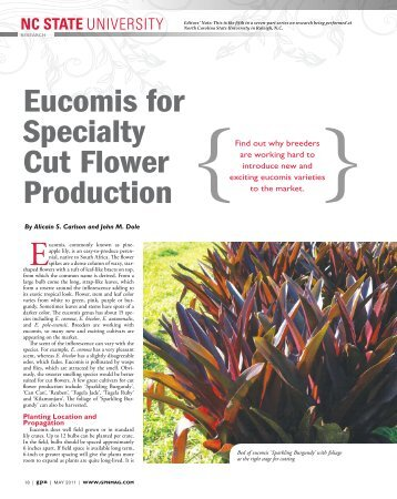 Eucomis for Specialty Cut Flower Production - Greenhouse Product ...