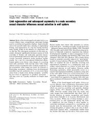 Limb regeneration and subsequent asymmetry in a male secondary ...