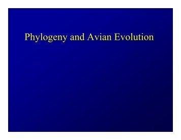 Phylogeny and Avian Evolution