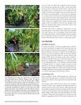 Giant swamp taro - Agroforestry Net - Page 7