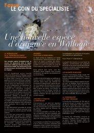 Une nouvelle espèce d'araignée en Wallonie - Natagora