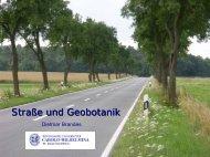 Straße und Geobotanik - Ruderalvegetation