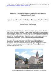 Spontane Flora der Befestigungsanlagen von Venzone (Italien, Prov ...