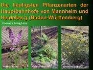 Die häufigsten Pflanzenarten der Hauptbahnhöfe von Mannheim und