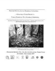 TAMAN NASIONAL WAY KAMBAS, INDONESIA - Panthera