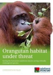 Orangutan habitat under threat - Rainforest Rescue