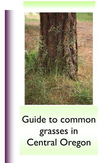Guide to common grasses in Central Oregon - Oregon State ...