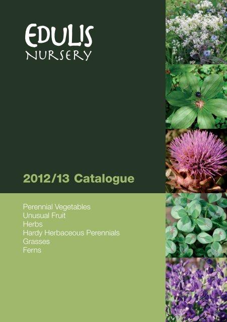 Hardy Alpine//Perennials Pulmonaria /'Mrs Moon/' ex 9cm pots