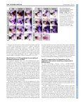 Dlx genes pattern mammalian jaw primordium by ... - Development - Page 4