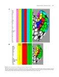 A Data-Driven Integrative Model of Sepal Primordium Polarity in ... - Page 4