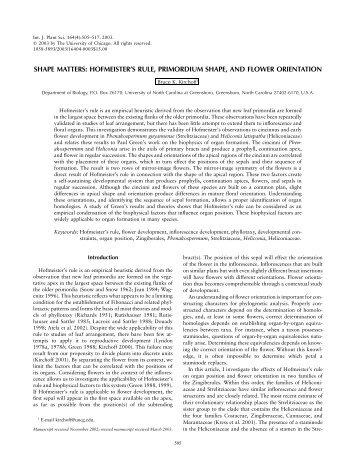 Shape matters: Hofmeister's rule, primordium shape and flower