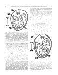 Shape matters: Hofmeister's rule, primordium shape and flower - Page 3
