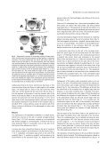 Hofmeister's Rule and Primordium Shape - The University of North ... - Page 3