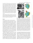Flower primordium formation at the Arabidopsis shoot apex ... - Page 3
