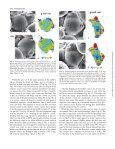 Flower primordium formation at the Arabidopsis shoot apex ... - Page 4