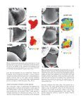 Flower primordium formation at the Arabidopsis shoot apex ... - Page 5