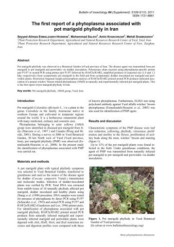 The first report of a phytoplasma associated with pot marigold ...