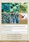Spring Catalogue 2013 - Bowden Hostas - Page 5