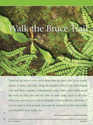 Ferns - Bruce Trail