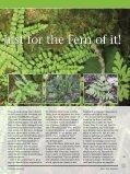 Ferns - Bruce Trail - Page 2
