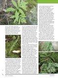 Ferns - Bruce Trail - Page 3