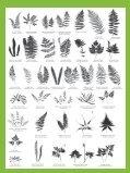 Ferns - Bruce Trail - Page 4
