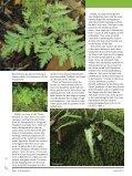 Ferns - Bruce Trail - Page 5