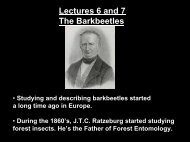 Lectures 6 and 7 - Bark Beetles