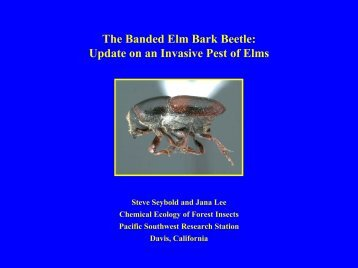 The Banded Elm Bark Beetle - California Forest Pest Council