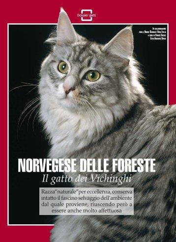 """Dossier sul """"Norvegese delle Foreste"""" - norskitalia"""
