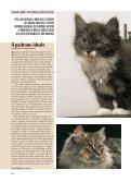 """Dossier sul """"Norvegese delle Foreste"""" - norskitalia - Page 6"""