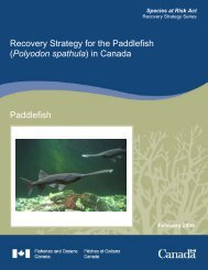 Recovery Strategy for the Paddlefish (Polyodon spathula) in Canada