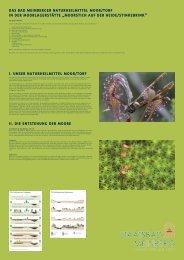 Information zum Moorstich Stinkebrink - Staatsbad Meinberg