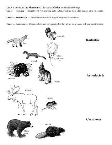 Rodentia Artiodactyla Carnivora