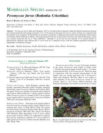Peromyscus furvus (Rodentia: Cricetidae) - BioOne