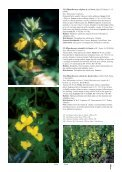 Pages 250-251 - The Hortus Press - Page 2