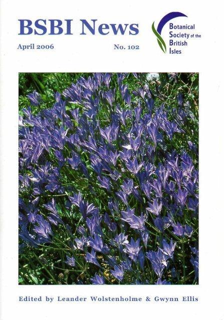 White Campion-Silene ALBA 1000 semi-British Wild Flower