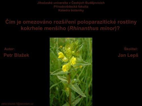 Čím je omezováno rozšíření poloparazitické rostliny kokrhele menšího