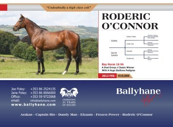 Ballyhane RODERIC O'CONNOR - Thoroughbred Stallion Guide